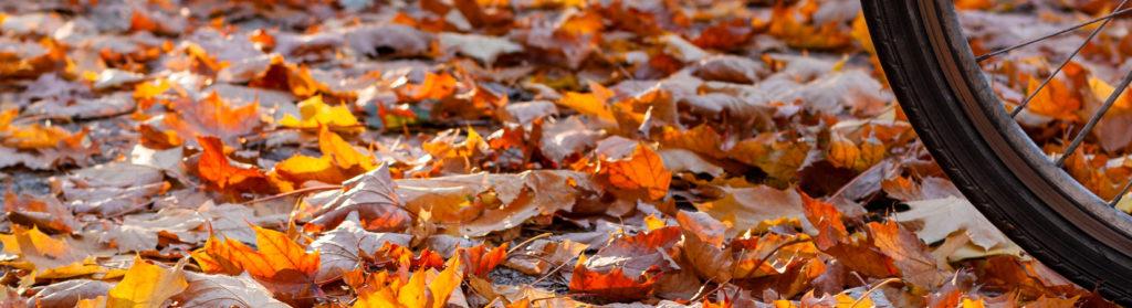 Es ist Herbst in Köln - Fotografie Nicole Hundertmark