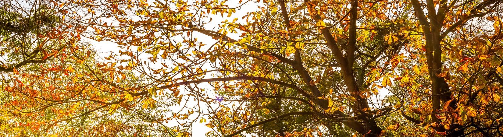 Herbstfarben 2019 Fotos von _ni_hundertmark