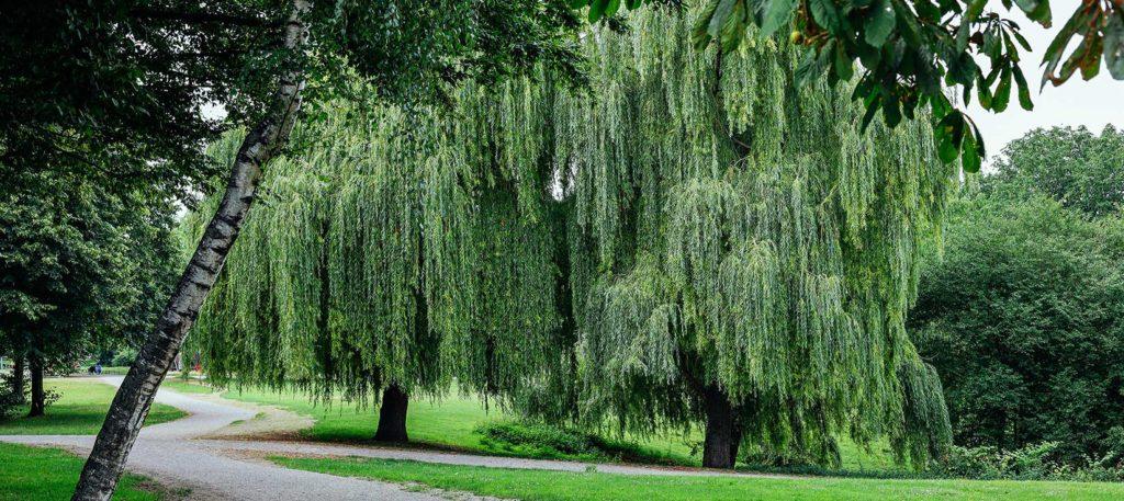 Blogbeitrag Kölner Grün im Sommer